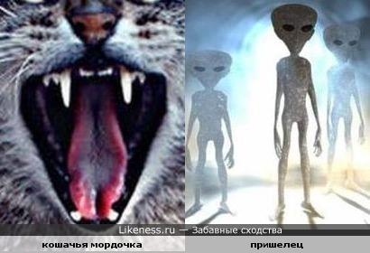 Морда кошки похожа на пришельца (фото кошака внутри)