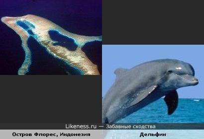 Остров Флорес похож на дельфина