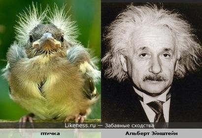 Пернатый Альберт Эйнштейн