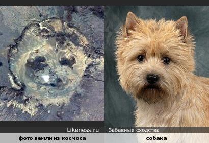 На фото из космоса видна собачья мордочка