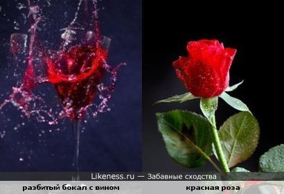 Разбитый бокал красного вина похож на розу