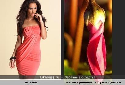 Бутон ццветка похож на вечернее платье