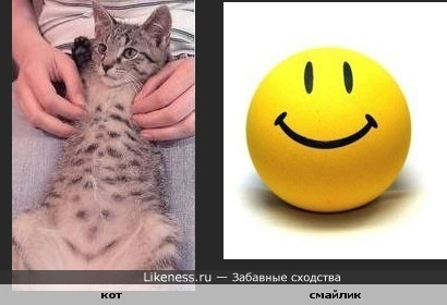 Кот с улыбкой на животе