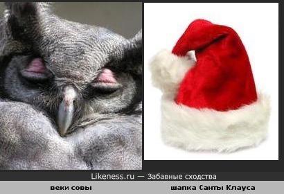 Веки совы похожи на шапку Санты Клауса
