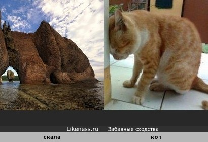 Скала напомнила кота
