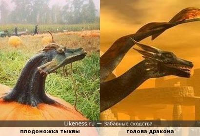 Плодоножка тыквы похожа на дракона