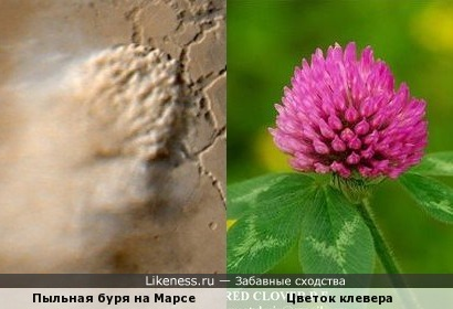 Пыльная буря похожа на цветок
