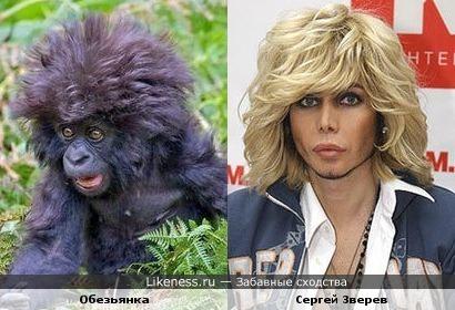 http://img.likeness.ru/uploads/users/3737/Zverev_monkey.jpg