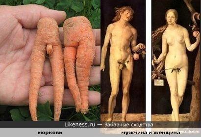 Морковь похожа на мужчину и женщину