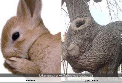 Дерево похоже на зайца