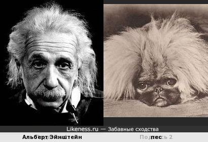 Эйнштейн и пес
