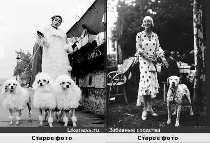 Владельцы похожи на своих собак