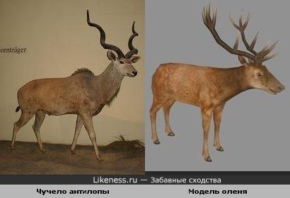Компьюторная модель благородного оленя похожа на чучело антилопы куду.