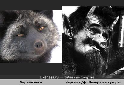 Черная лиса похожа на черта)))