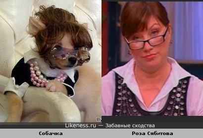 Собачка напомнила мне Розу Сябитову