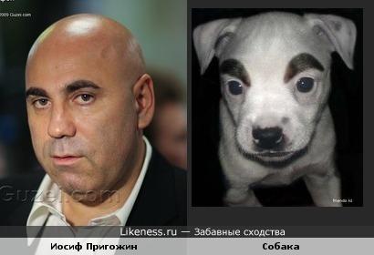 пригожин и собака