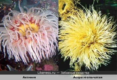 актиния похожа на цветочек))