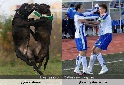 собаки и футболисты