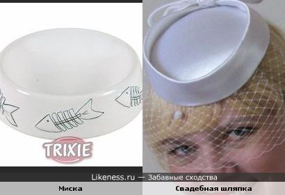 шляпка похожа на кошачью миску