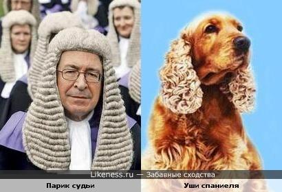 парик судьи похож на уши спаниеля))