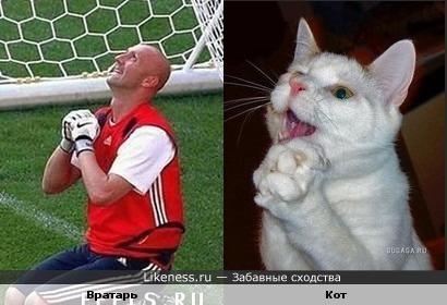 футболист и кот похожи