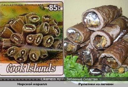 морской коралл из семейства мозговиков похож на рулетики)