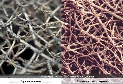 яичная скорлупа под микроскопом похожа на сухие ветки