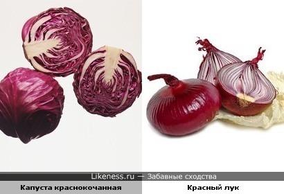 краснокочанная капуста напоминает красный лук