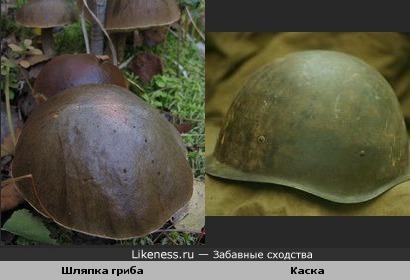 шляпка гриба похожа на каску