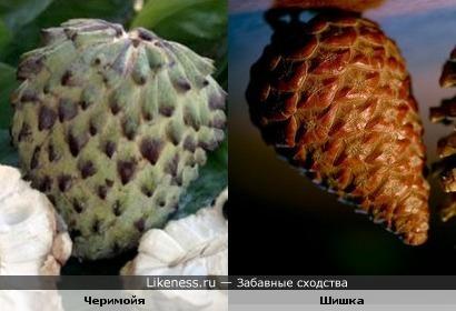 экзотический фрукт напоминает шишку