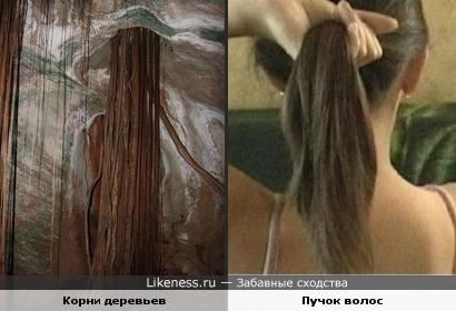 проросшие в пещеру корни деревьев напоминают пучки волос