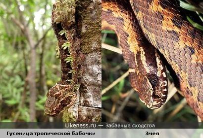 гусеница очень похожа на змею