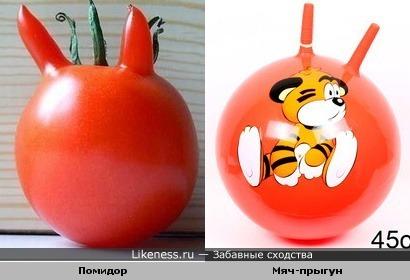 помидор похож на мяч-прыгун