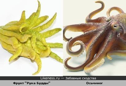 экзотический фрукт напоминает осьминога