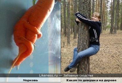 морковь похожа на человека)))