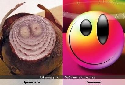 луковица на срезе напоминает пьяный смайлик с рожками)))