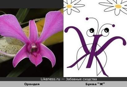 орхидея похожа на букву