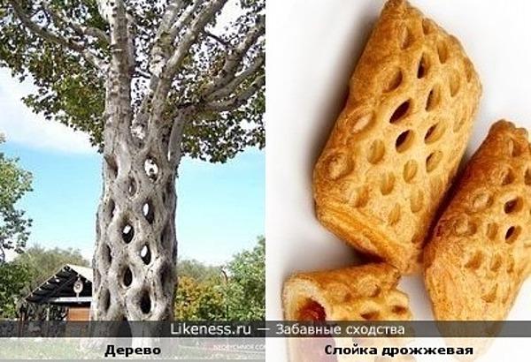 ствол дерева напомнил дрожжевую слойку-сеточку