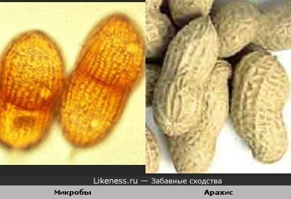 микробы напомнили арахис