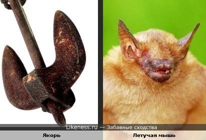 якорь и голова летучей мышки))