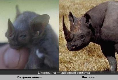 летучая мышка напомнила носорога))
