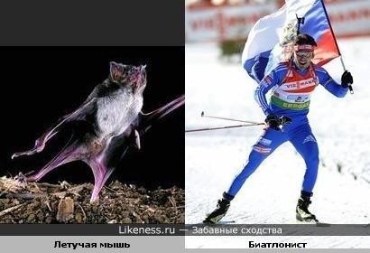 некоторые летучие мыши занимаются спортом))))))))))