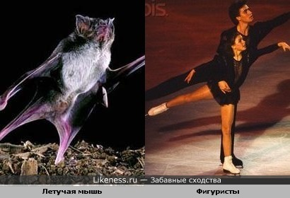 А может мышка занимается фигурным катанием?)))))))))))))))