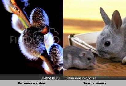 Эта веточка вербы напоминает мышонка или зайчонка)))