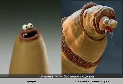 """Браун из мультфильма """"Перпл и Браун"""" похож на личинку синей мухи (идею подсказала LeDa)"""
