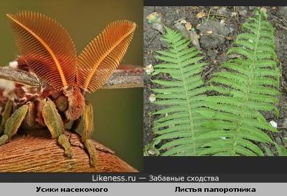 усики насекомого и листья папоротника похожи