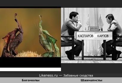 ради юмора: богомолы-шахматисты)))