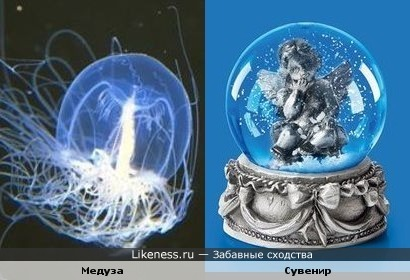 Существо из глубин океана напоминает шар-сувенир