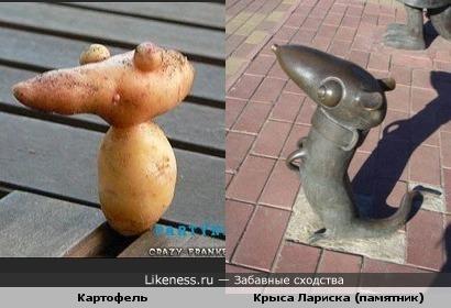 Картошка похожа на крысу старухи Шапокляк