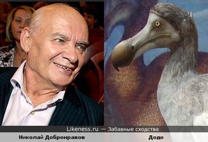 Нос Добронравова и клюв птицы додо